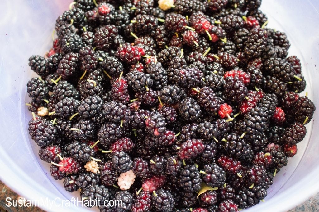 A white plastic bowl filled with harvested fresh mulberry fruit.