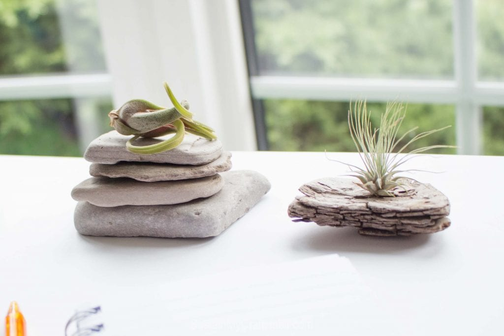 A stack of flat beach stones and an interesting piece of driftwood on a desk as examples of DIY air plant display ideaas