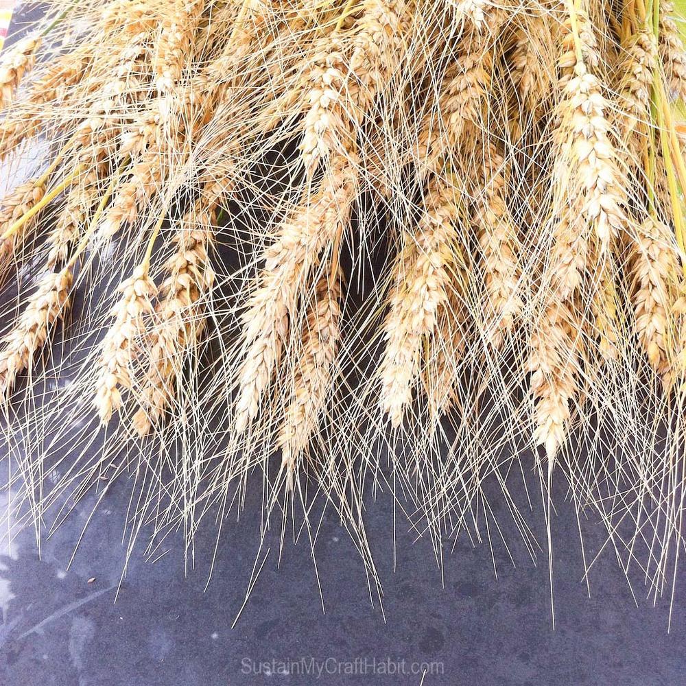 Beautiful golden wheat grains against a dark gray tile surface