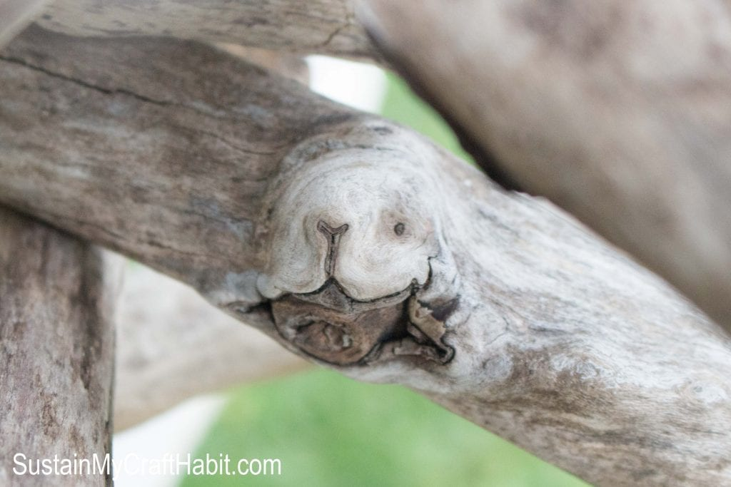 A close up image showing a piece of driftwood the looks to have the shape of a dog's face