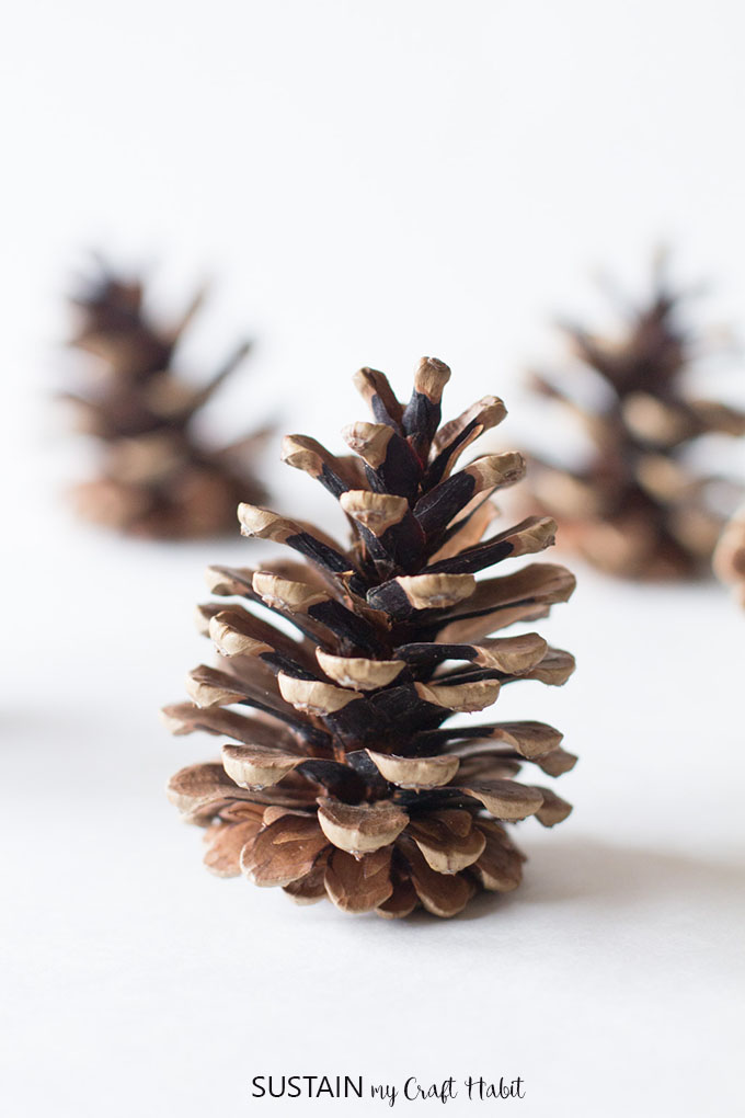 Learn how to naturally clean pine cones for crafts with these simple steps.