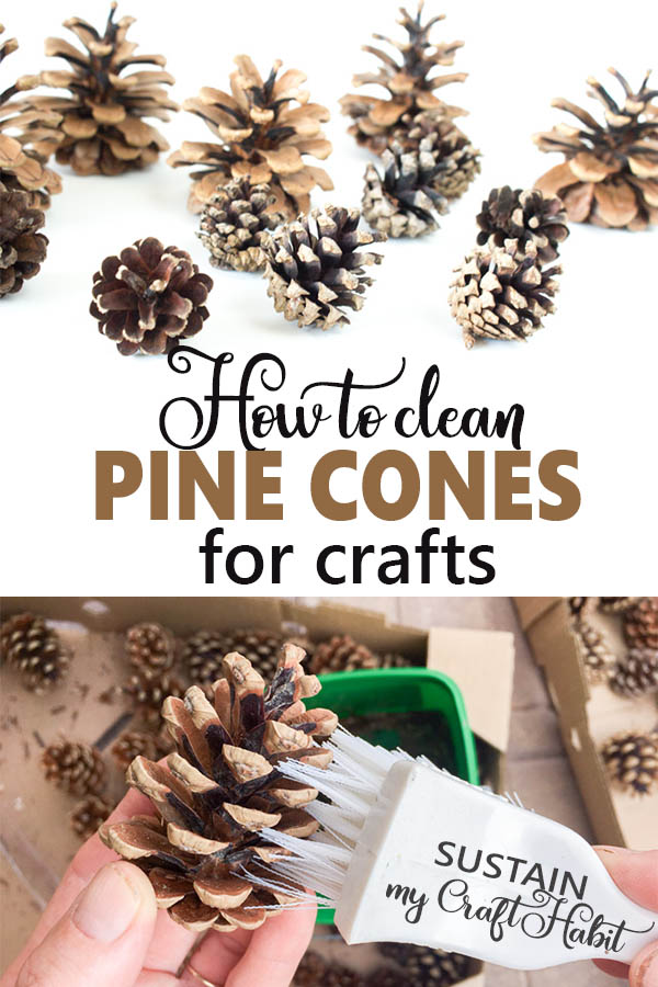 Title image of how to clean pine cones for crafts