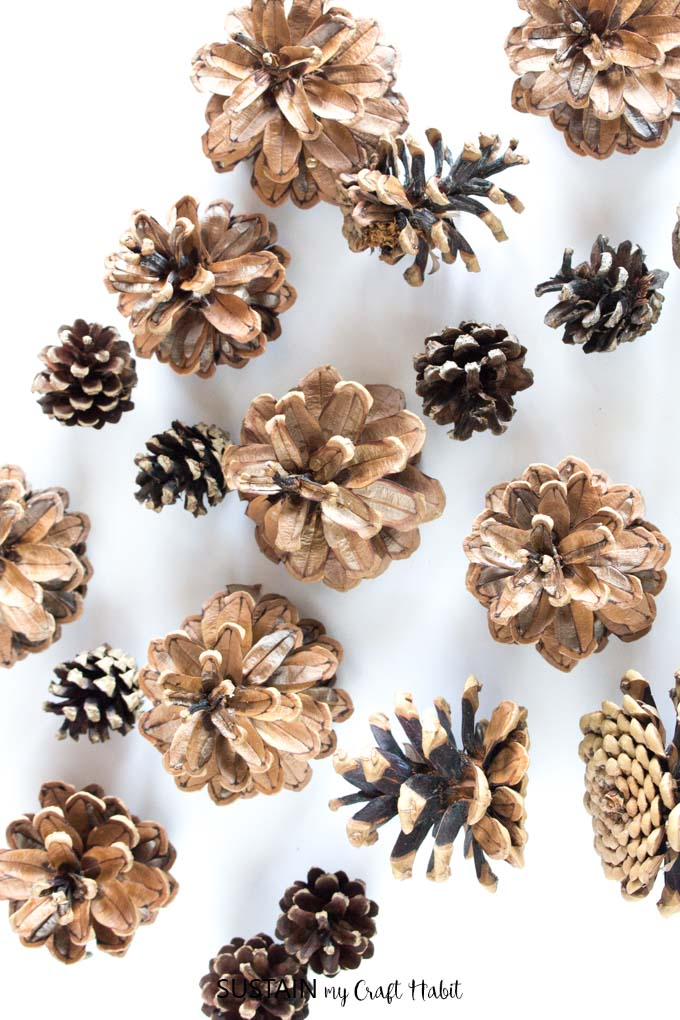 Simple and natural method for cleaning pine cones for crafts