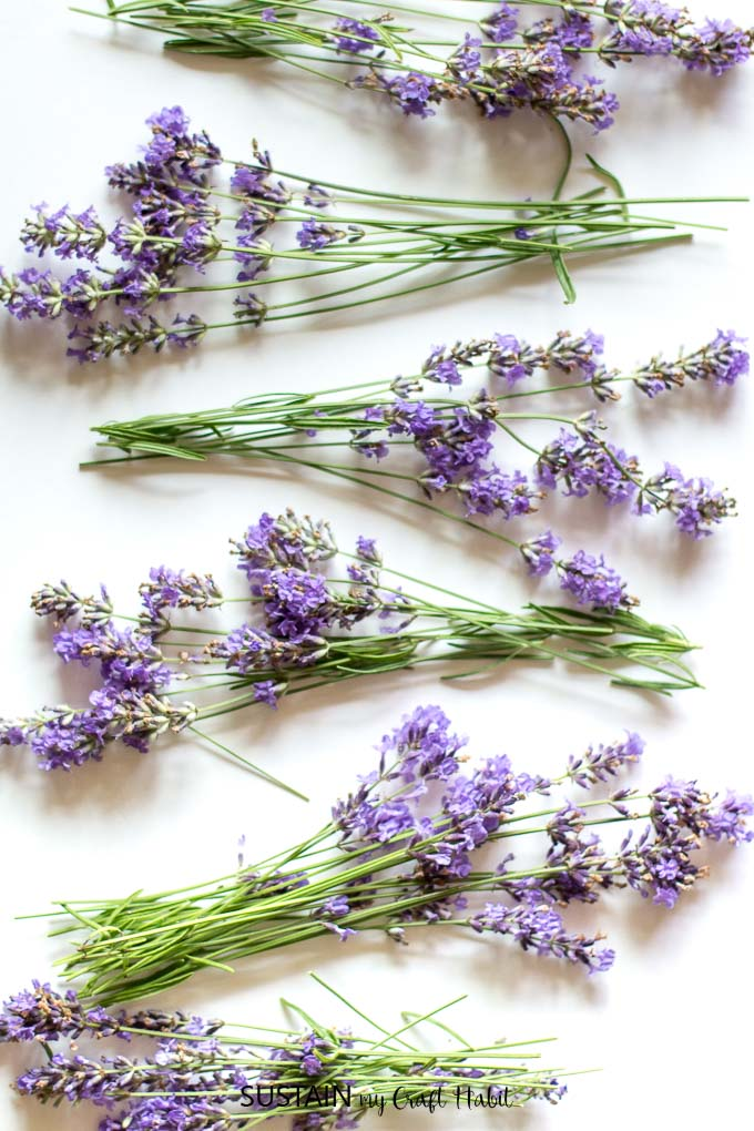 Dried lavender bunches for crafting