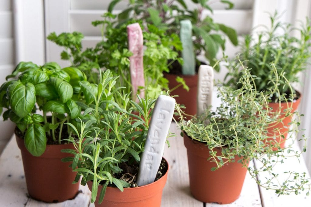 Clay pots with various herbs and handmade her garden markers placed within.