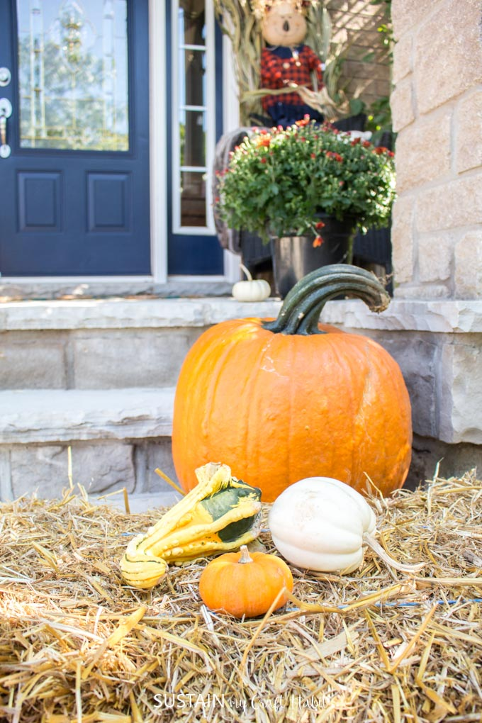 A vignette with orange and white pumpkins and gourds on a hay bale