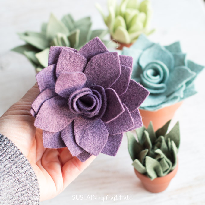 potted felt succulents