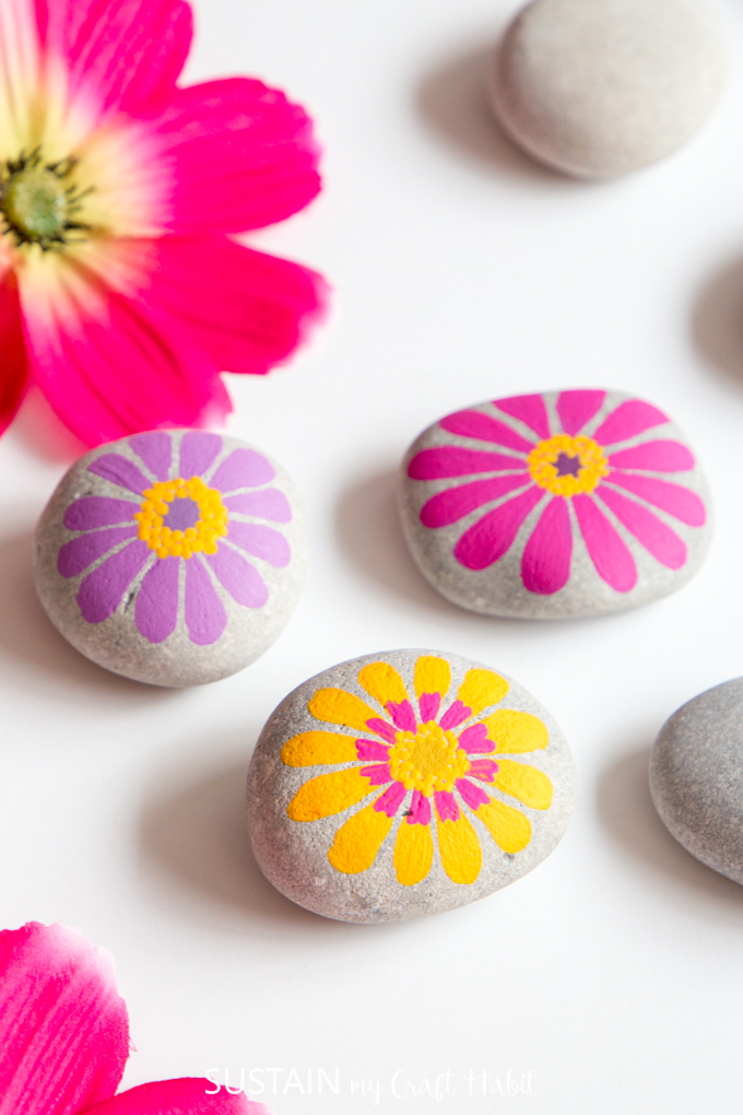 Pink, yellow and purple zinnia flower painted rocks on a white background surrounded by unpainted beach stones and fresh zinnia blooms.