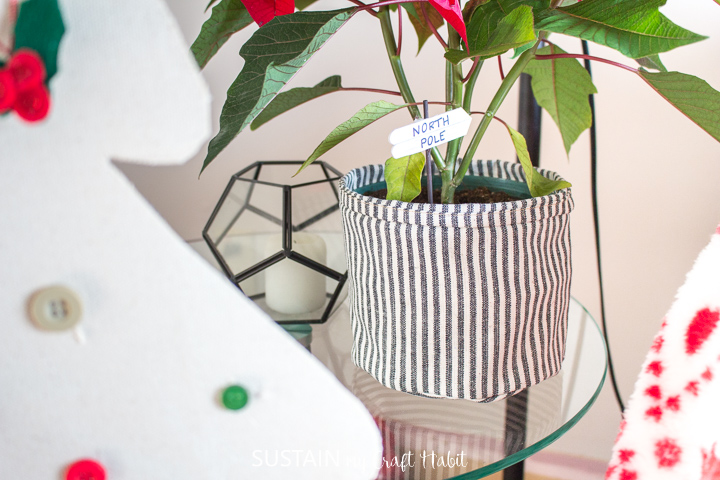 A view of a canvas planter and poinsettia.