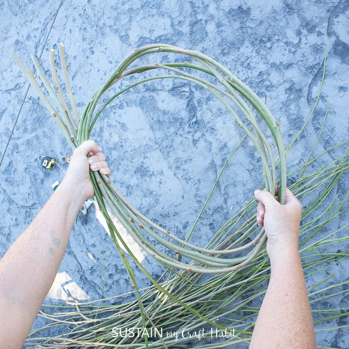 Making a circle with mulberry vines.