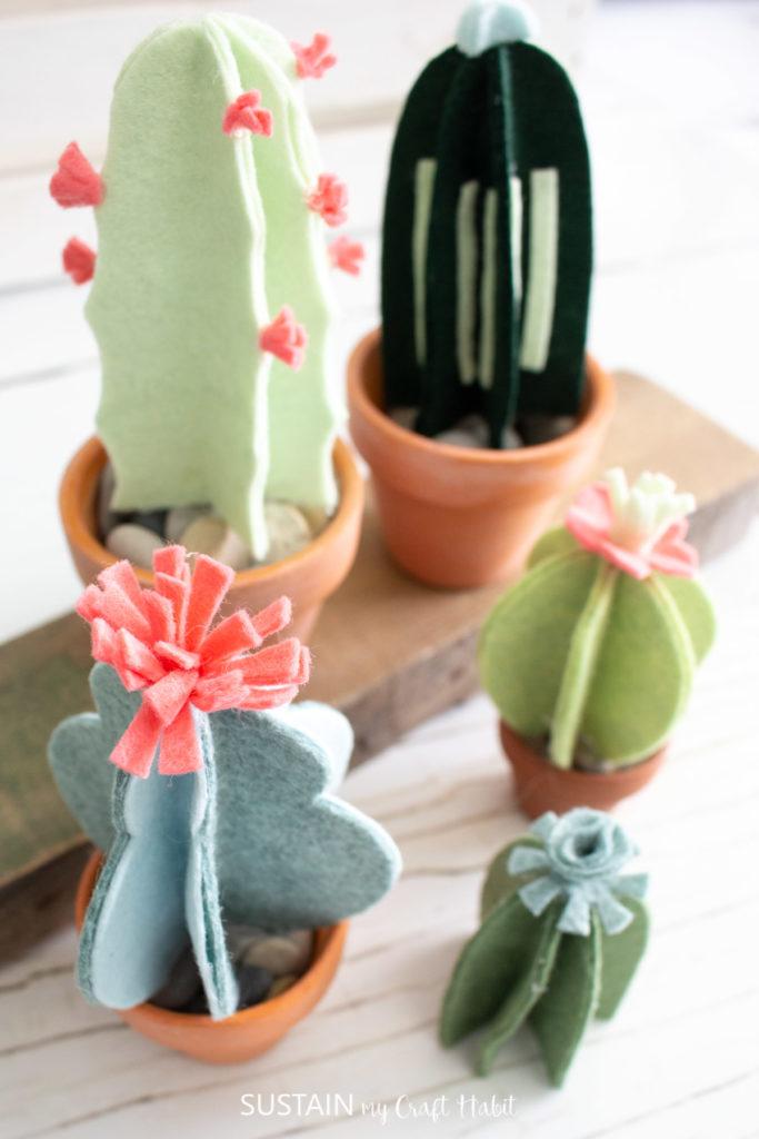 different types of felt cacti plants