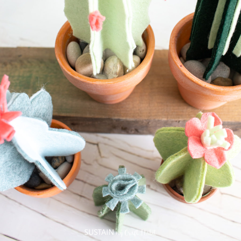 overview picture of potted felt cacti