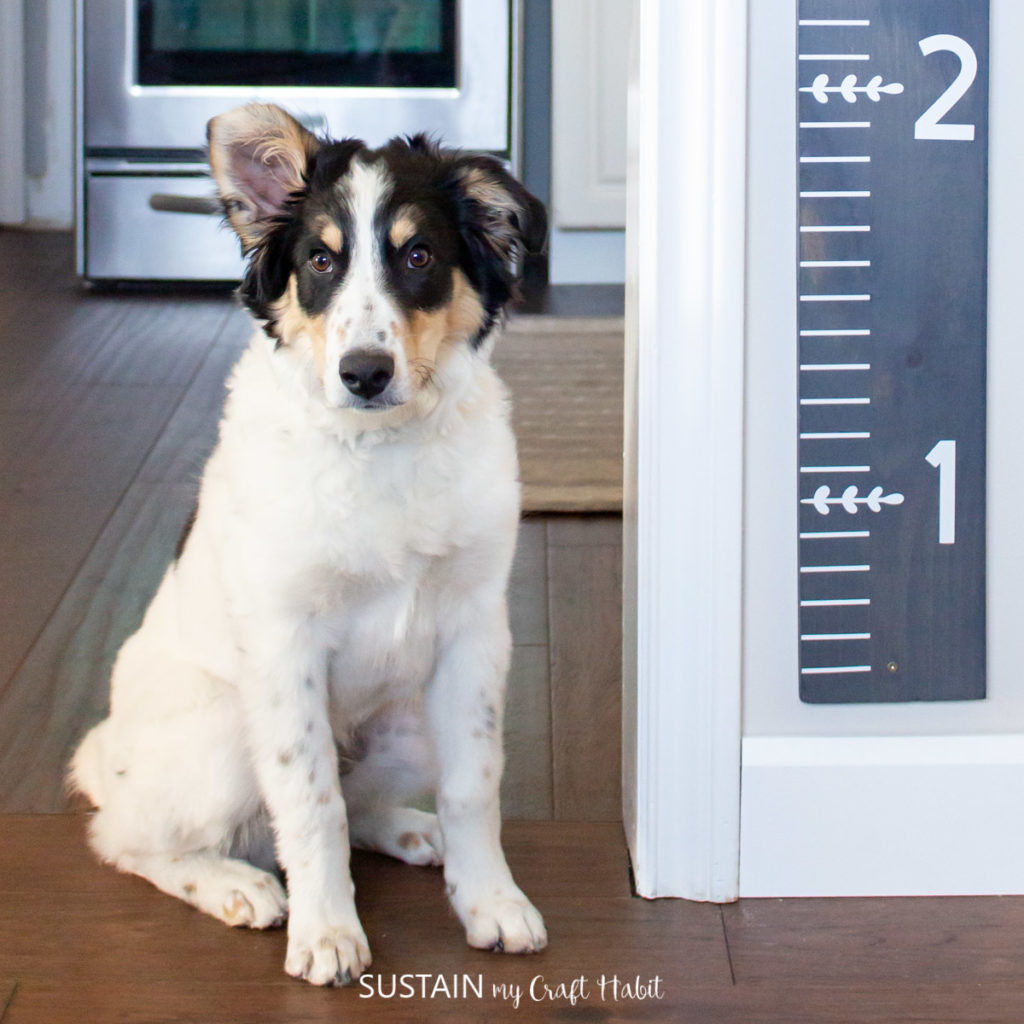 dog standing next to w DIY wooden growth chart