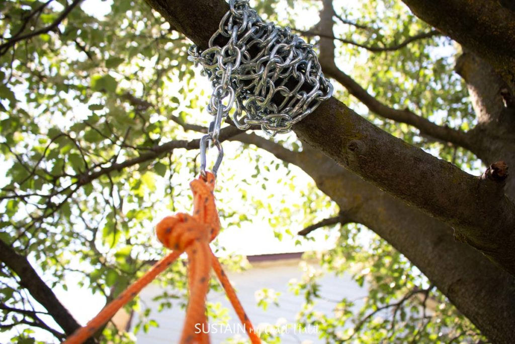 Chain wrapped around a tree branch and holding rope.