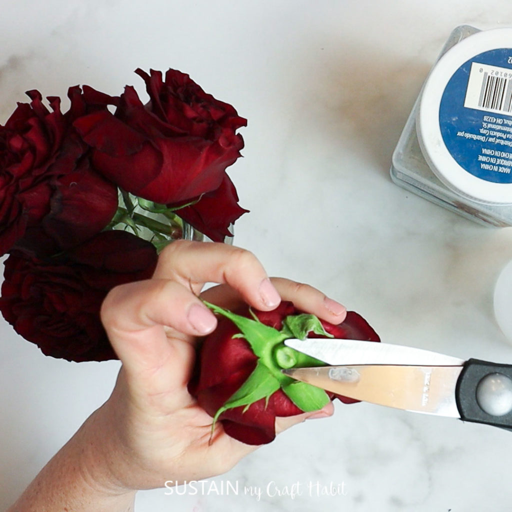 trimming the stem of the rose