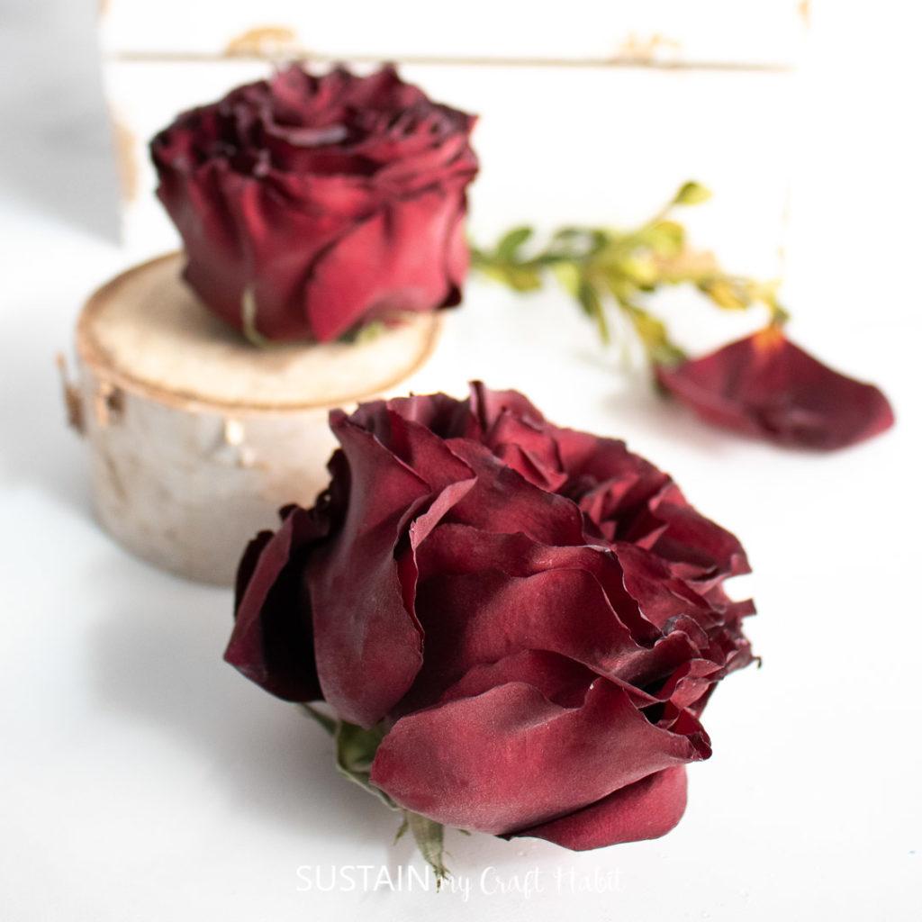 beautiful dried rose