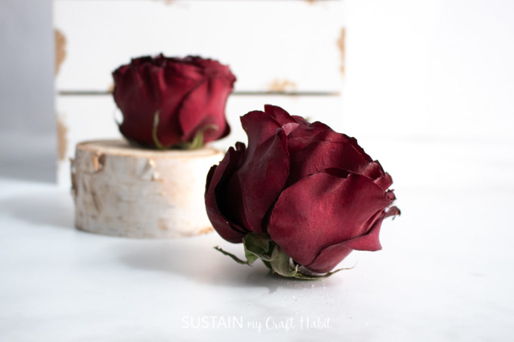two roses preserved in silica crystals