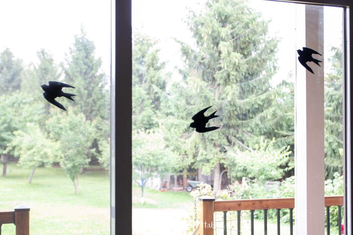 bird decals on a screen door