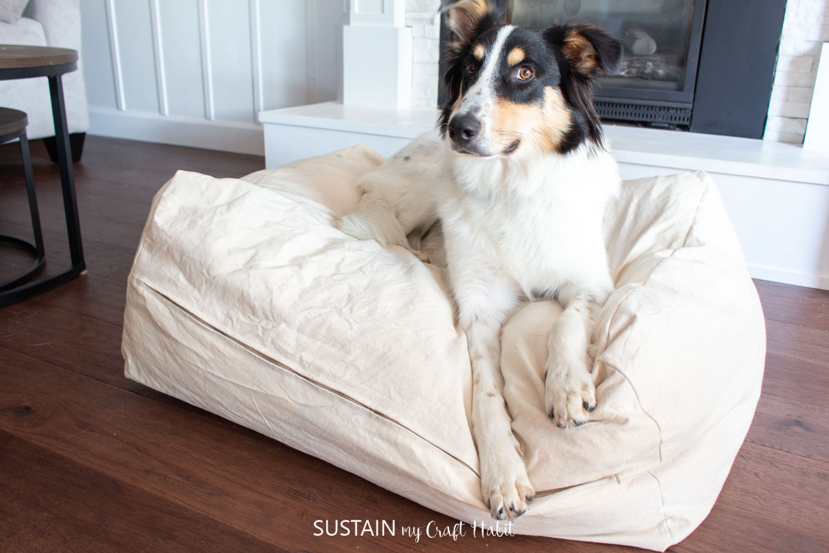 A dog laying on a dog bed.