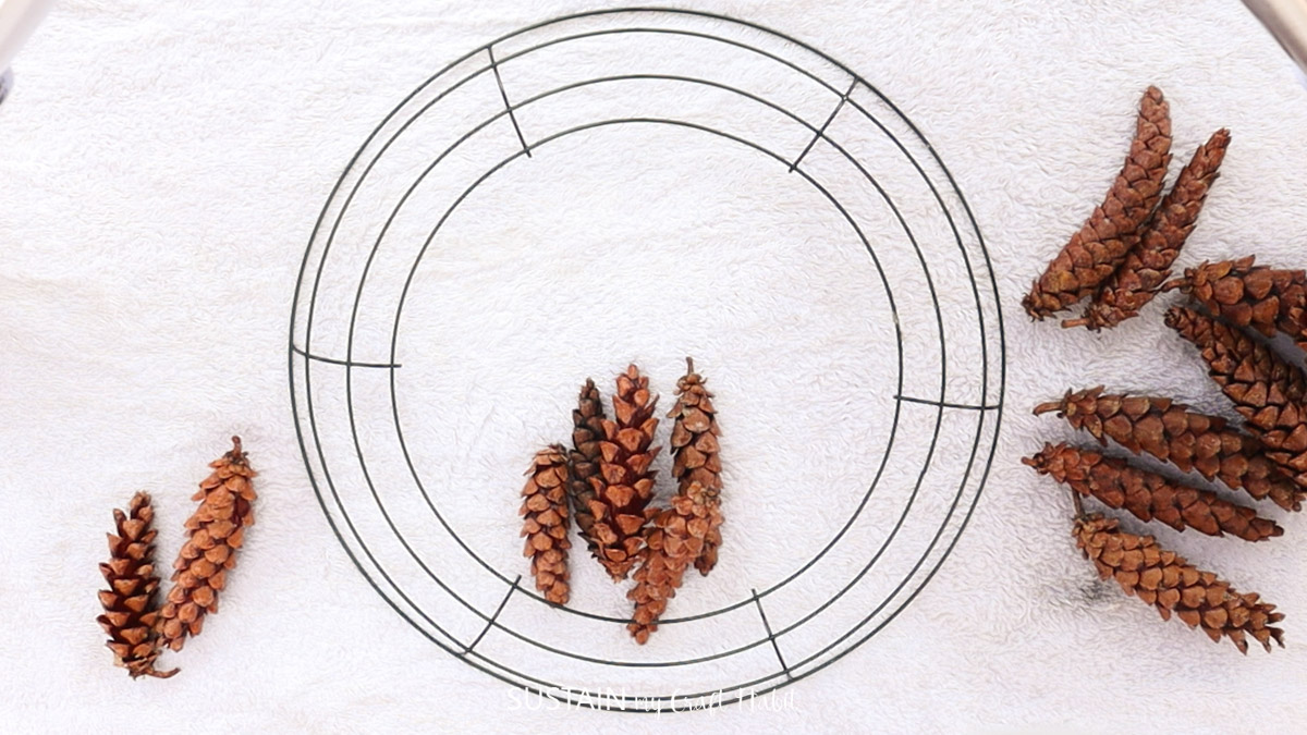 Sorting pinecones around the wreath form based on size.