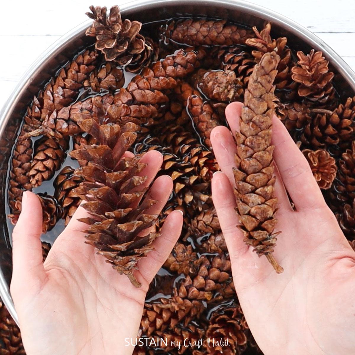 Hand holding pinecones.