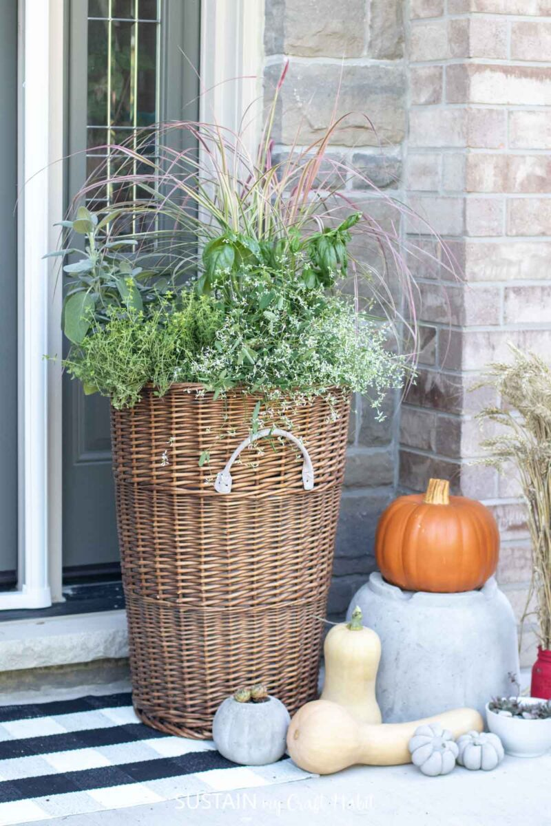 Wicker basket fall planter with greenery, next to pumpkins and squash.