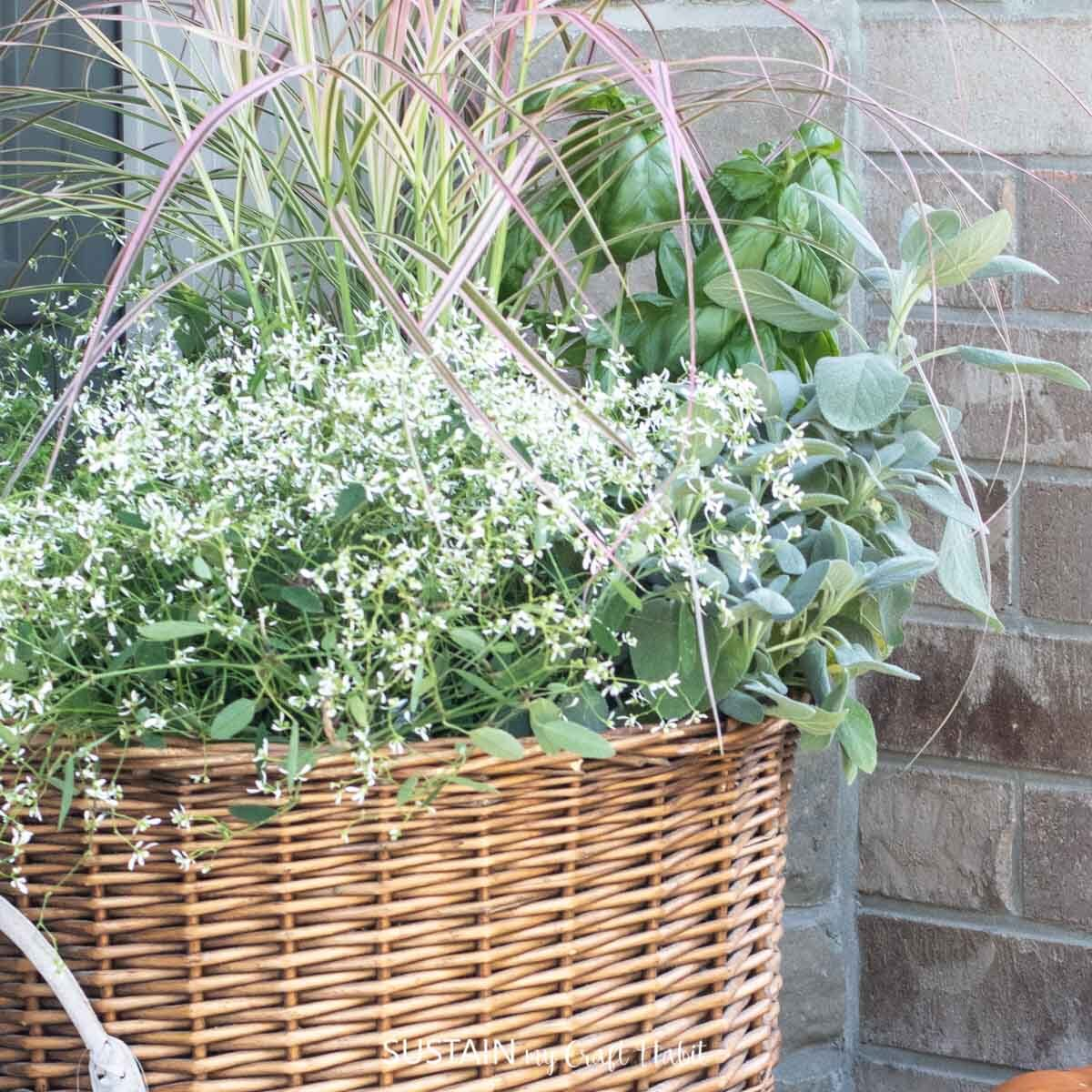 Assorted herbs placed in a wicker basket planter.